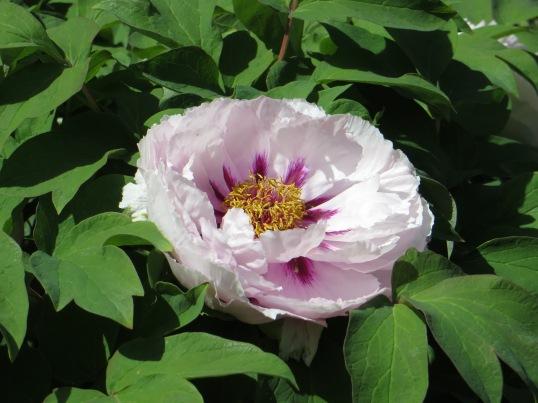 Nestled Flower