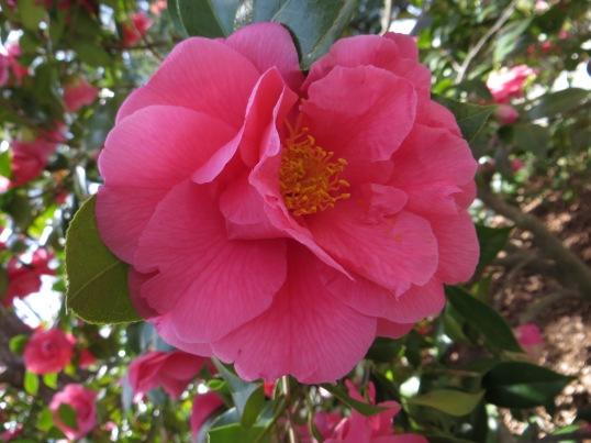 Bright pink beauty